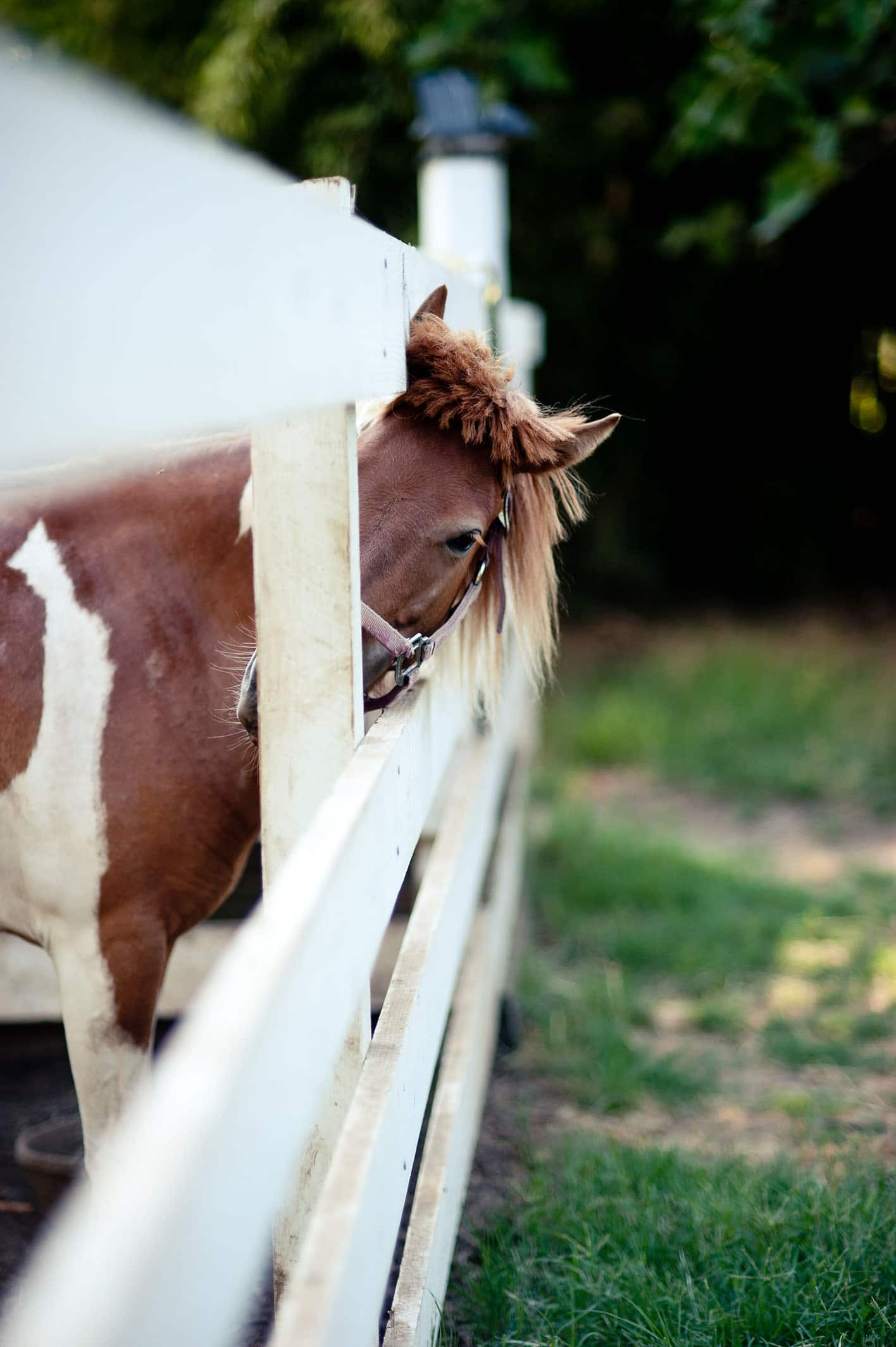 Peeking Pony